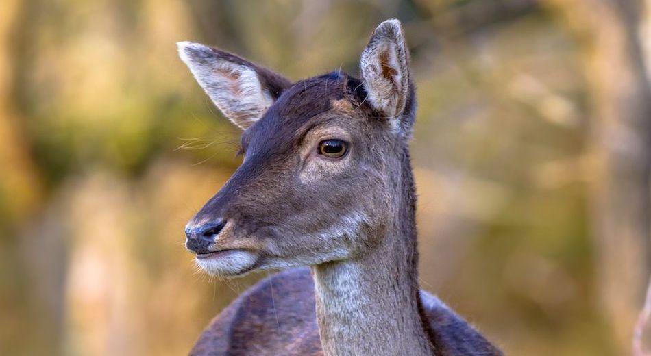 ongeval-met-wilde-dieren letselschade advocaat amsterdam
