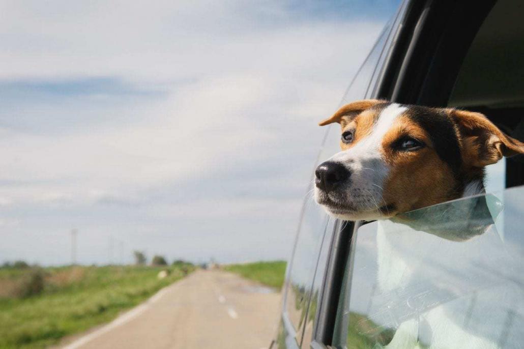 verkeersongeval door dier aansprakelijkheid letselschade advocaat amsterdam