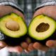 avocadoletsel avocadohand letselschade advocaat amsterdam